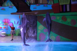 Delfinaariumis